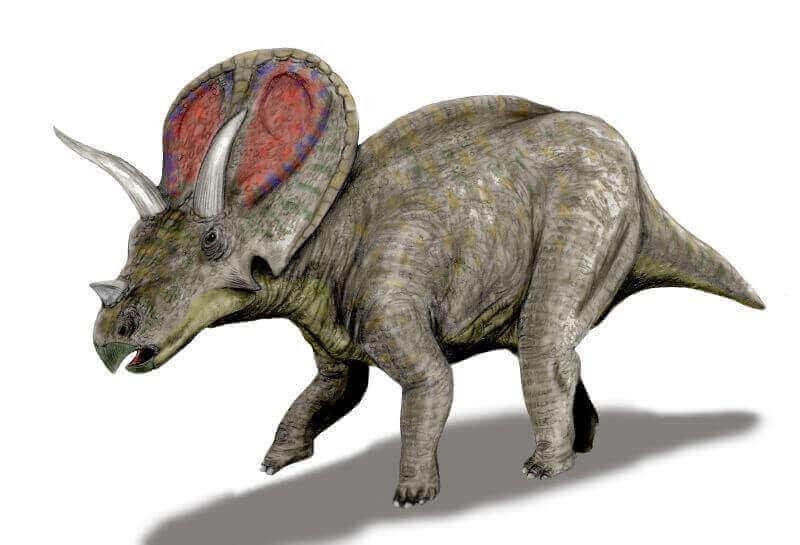 Torosaurus: König der Dinosaurierbirnen.