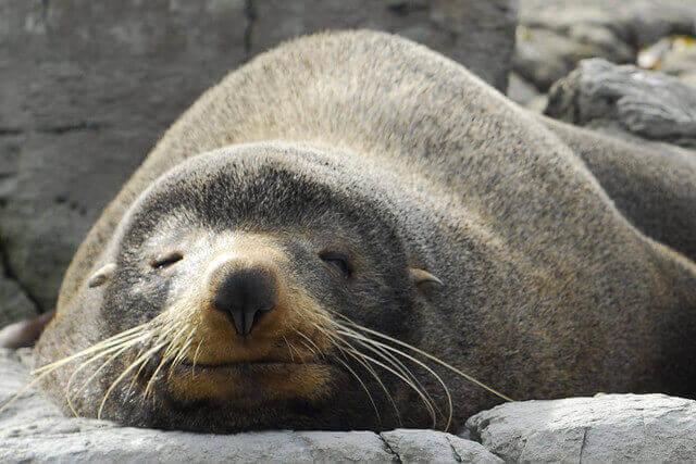 seal-tier